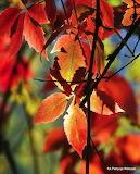 Jesień-foto-Patrycja Walczak