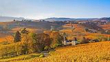 Beaujolais Region Vineyards