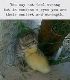 Kitten and duck pals
