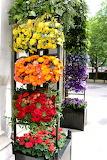 Colorful flower trellis