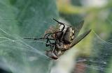 Nella-morsa-del-ragno