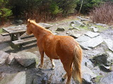 Shelter Pony