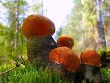 грибы 47