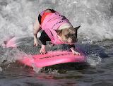 Surfing princess