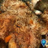 Science tumblr noaasanctuaries octopus