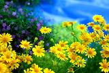 ☺♥ Beauties under a blue sky...