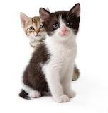 Cute-kittens-2