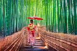 Japonaise-paysage de bambous