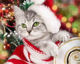 Christmas Kitty @ Pinterest...