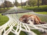 Relaxing summertime