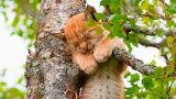 Tree sleeping