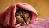 cat in a pink scarf