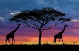Sunset on the Savanna