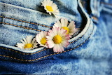 Daisies In My Pocket