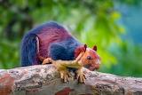 Ecureuil-multi couleurs