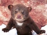 Black Bear Cub...