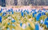 Весна. Цветы