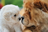 ☺ Nose to nose with you...☺☺☺