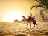Sand, sky, desert, camel, Egypt, pyramid, Cairo, palm tree