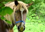 Horse-4235745 1920