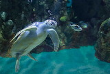 Different-types-of-photography-Underwater-photography-700x467