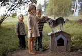 Children, dog, nature, girl, boy, kids, animal