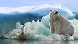 27 feb polar-bear-
