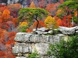 Autumn Cliff