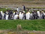 penguins, South Georgia