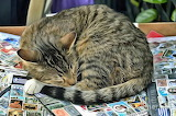 Painting Cat Sleeping on Stamps by George Astametakis