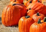 🌻Beautiful Pumpkins...