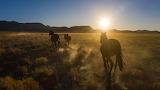 Wildpferde/ Wild horses