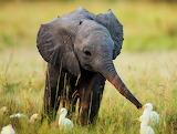 Tierno bebé elefante