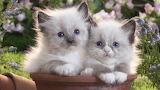 Cute-Kittens-in-the-Garden-1920x1080-wide-wallpapers net