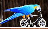 #Circus Parrot Cycling