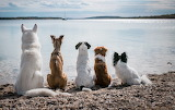 Dogs Looking At The Sea