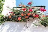 Red-and-orange-petal-flowers-1122857