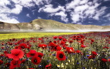 Wild-flowers-mixed-in-the-field-by-the-hill