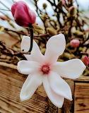 Flores449