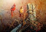 WM Birds 1