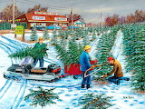Hilltop Tree Farm - Ken Zylla