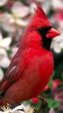 Most beautiful bird