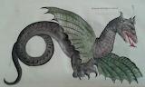 Dragon Aldrovandi