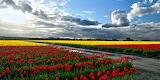 Flowers-panorama