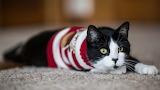 Cat in winter sweater