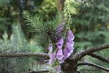 Botanical intimacy