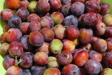 Plums-in-a-bowl