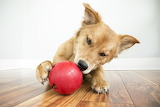 Snack n my toy