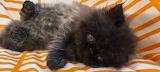 My 2nd cat Bogi