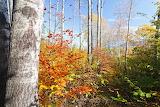 Evgeni Dinev Photography Kupena Forest Reserve